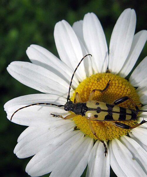 Zbirka insekata
