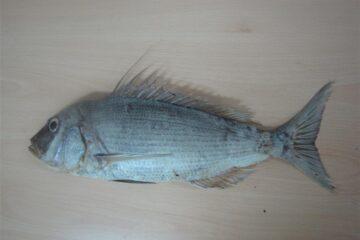 Zbirka riba