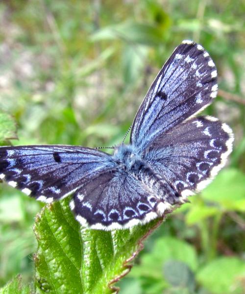 28. maj – Međunarodni dan leptira