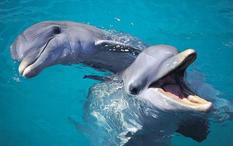 2. maj – Svjetski dan delfina