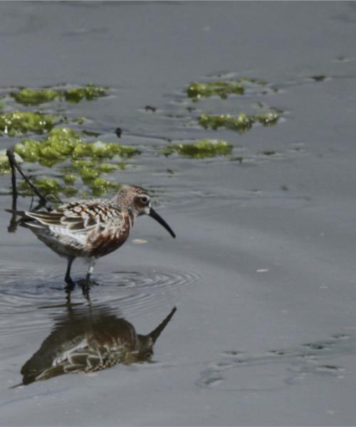 Da li ptice mogu da prenose korona virus?